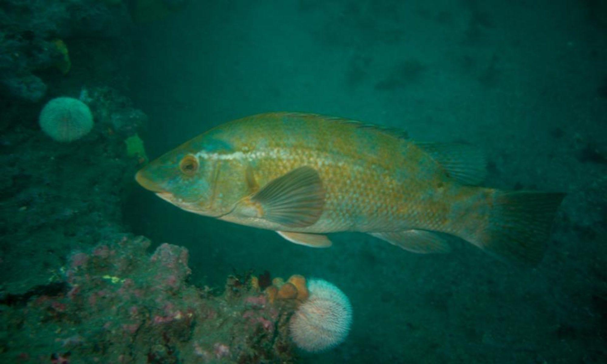 Ennis Sub Aqua Club